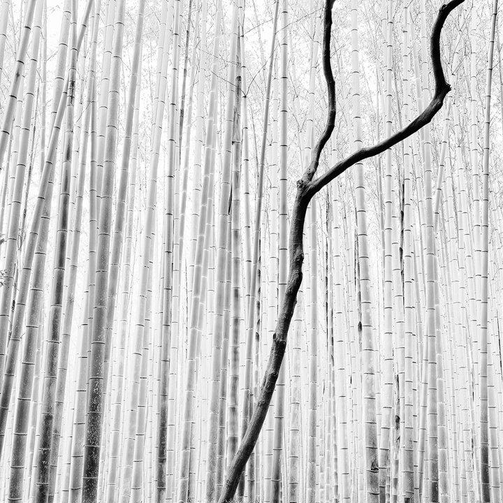 Arashiyama Bamboo Forest - Tribute to J.Hoflehner (2010)