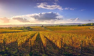 Gaiole in Chianti vineyards