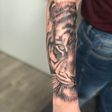 Tigre gwen.JPG