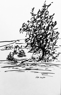 Along the Yellowstone, ink, 5.5x8.5, $40