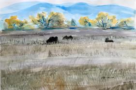 Queit Pasture, watercolor, 9x6, $60