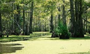 SWAMPS IN NEW ORLEANS?