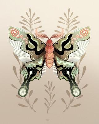 Night Butterfly.jpg