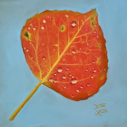 One Orange Aspen Leaf