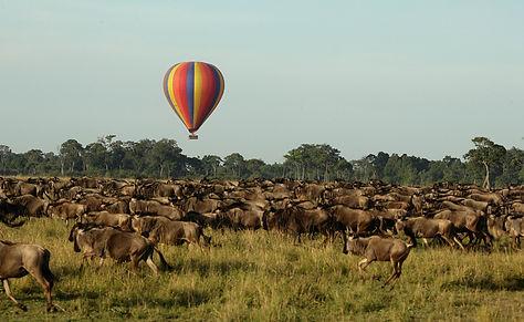 wildebeest view from balloon.jpg