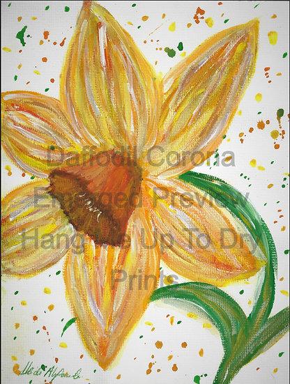 Daffodil Corona Emerged