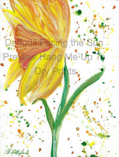 Daffodil Facing The Sun