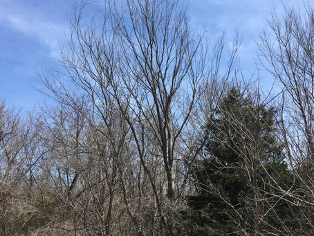 Trees, Morels, and Mycorrhizal Relationships