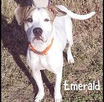 Emerald2_edited.jpg