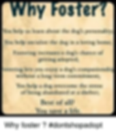 why-foster-you-help-us-learn-about-the-d