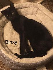 Binxy_edited.jpg
