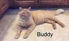 Buddy_edited_edited.jpg