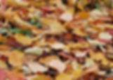 hojas.jpg