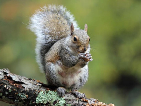 I Loathe Squirrels