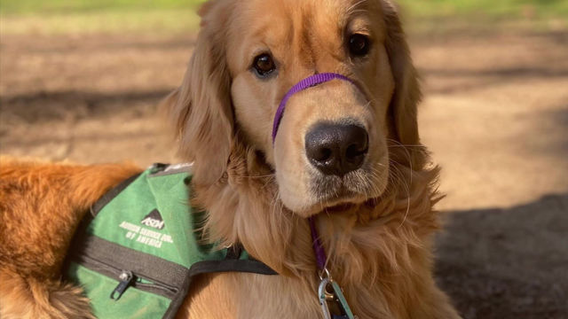 What Are the Dogs Learning: Socialization and Exposure