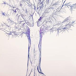 TreeOrShe_ #tree #eucaliptus #sardegna #