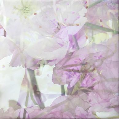 haenni-irene_ot_2021_pigmentdruckaufcanvas_55x55cm_k2_IMG_6520.jpg
