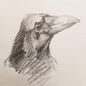 Crows Head