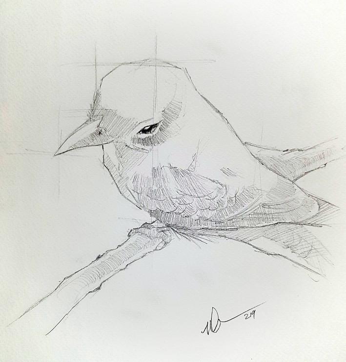 Peters Bird