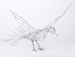 Bird by Arik Afek