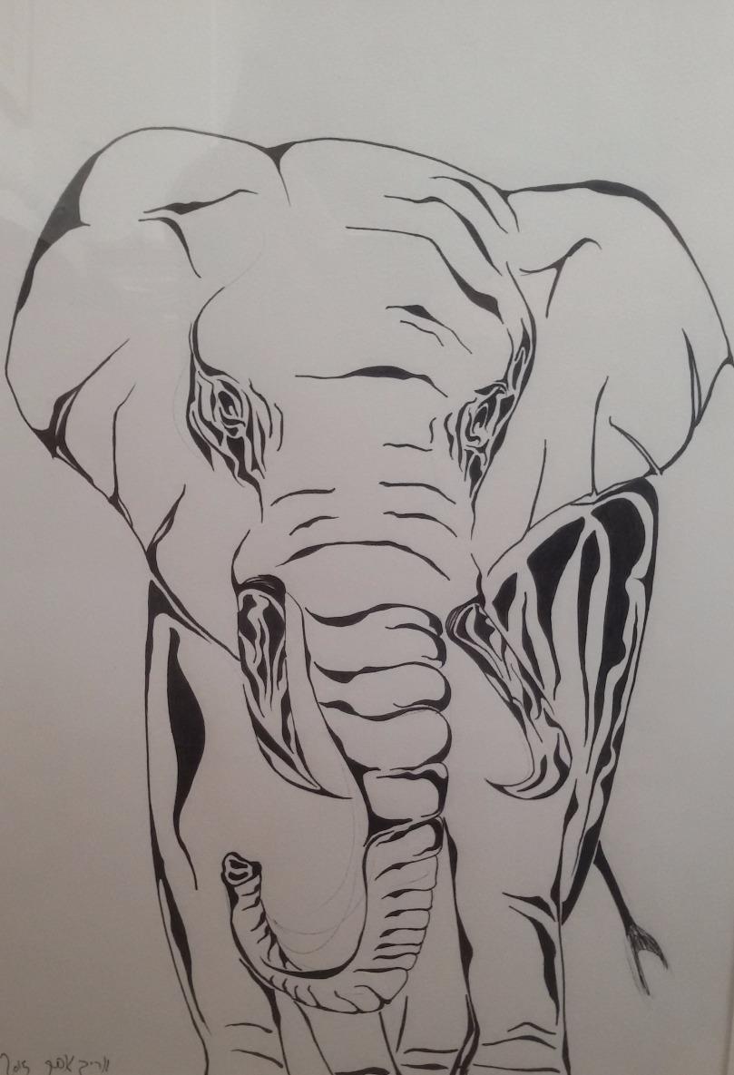 Elephant by Arik Afek