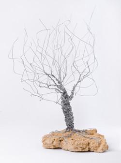 Blowing in the Wind by Arik Afek
