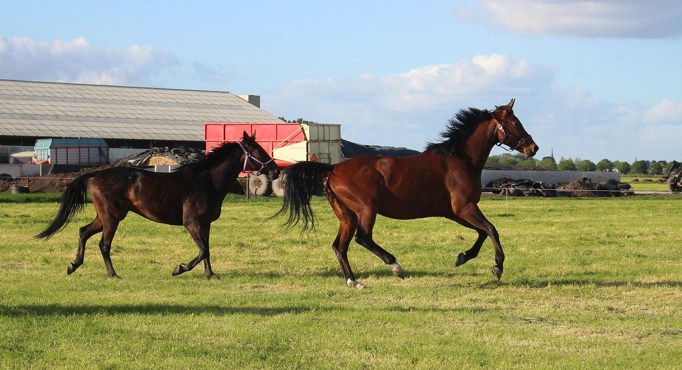 Van-Esch-Paardencoaching-Alphen-aan-Den-