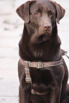 Zorghuis-van-Esch-Hondencoaching-Alphen-