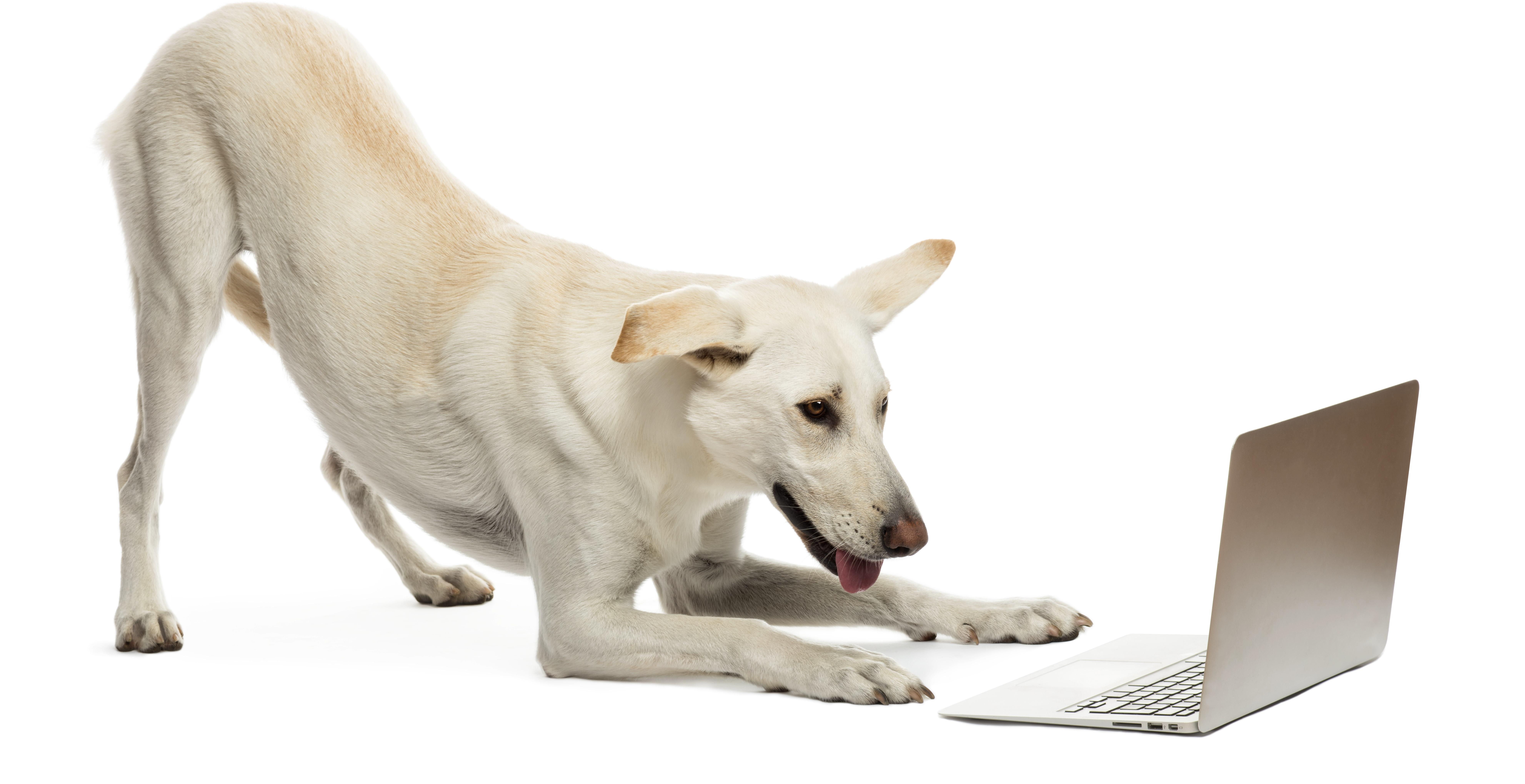 new dog 5.jpg