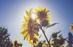 bloom-blossom-flora-963060.jpg