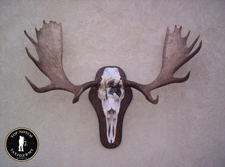 skull3.jpg
