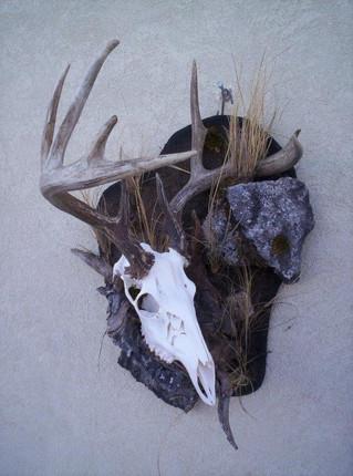 skull4.jpg