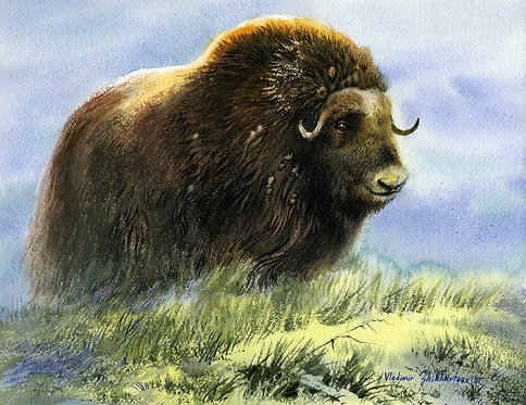 #47 Vladimir Zhikhartsev MUSK-OX, ALASKA original watercolor(unframed)
