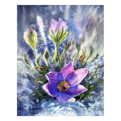 PASQUE FLOWERS, ALASKA original watercolor(unframed)