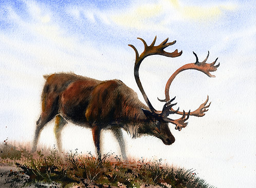 CARIBOU IN DENALI, ALASKA original watercolor(unframed)