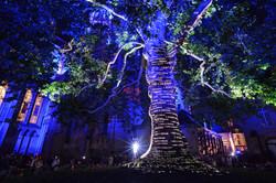 Office de Tourisme - Bayeux : Sons et lumières autour de l'Arbre de la Liberté