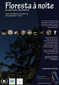 Floresta_à_noite.png
