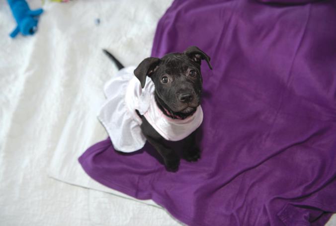HudsonMOD's 5th Anniversary Benefiting Animal Aid USA
