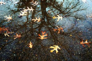 Torin_Helsey-Leaves-Reflection-300x200.jpg