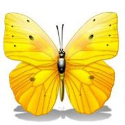 Butter_Fly_Yellow-183x183.jpg