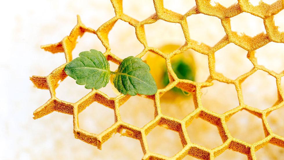 Miel de nos ruches