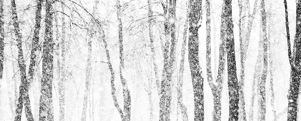 Snowy%20Trees%20Transparent_edited.png