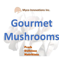 Myco Innovation