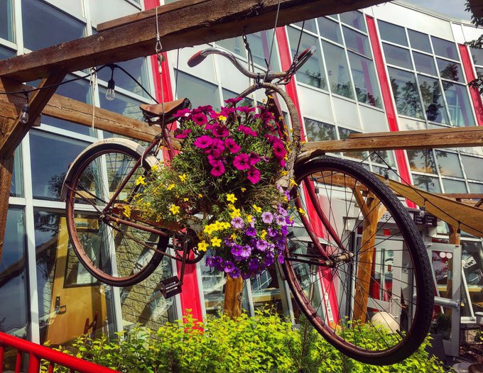 bicyclette en fleurs.jpg