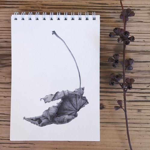 NB05 Sycamore leaf