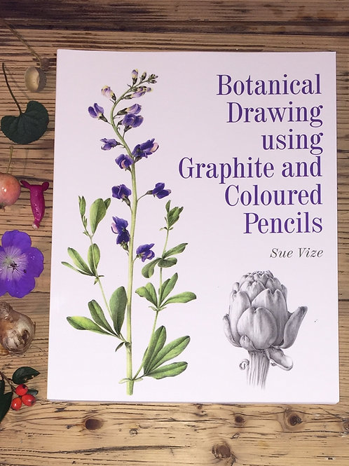 Botanical Drawing using Graphite and Coloured Pencil by Sue Vize