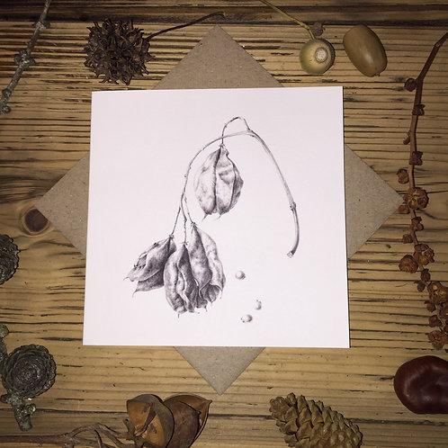 G02 Caucasian Bladdernut