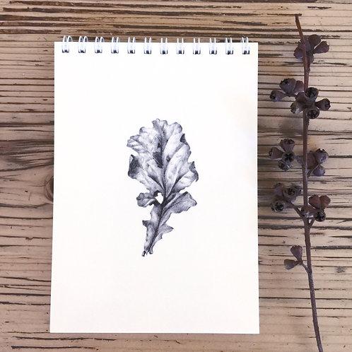 NB02 Oak Leaf