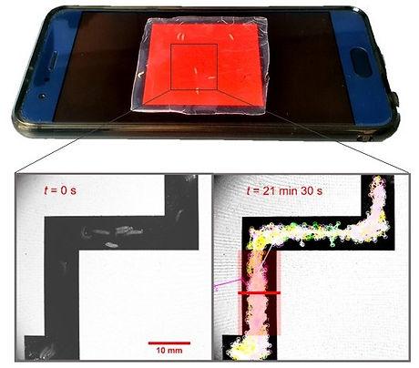 Smartphone-mit-Larven_2.jpg