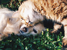 Why Do Dogs React to Cats?